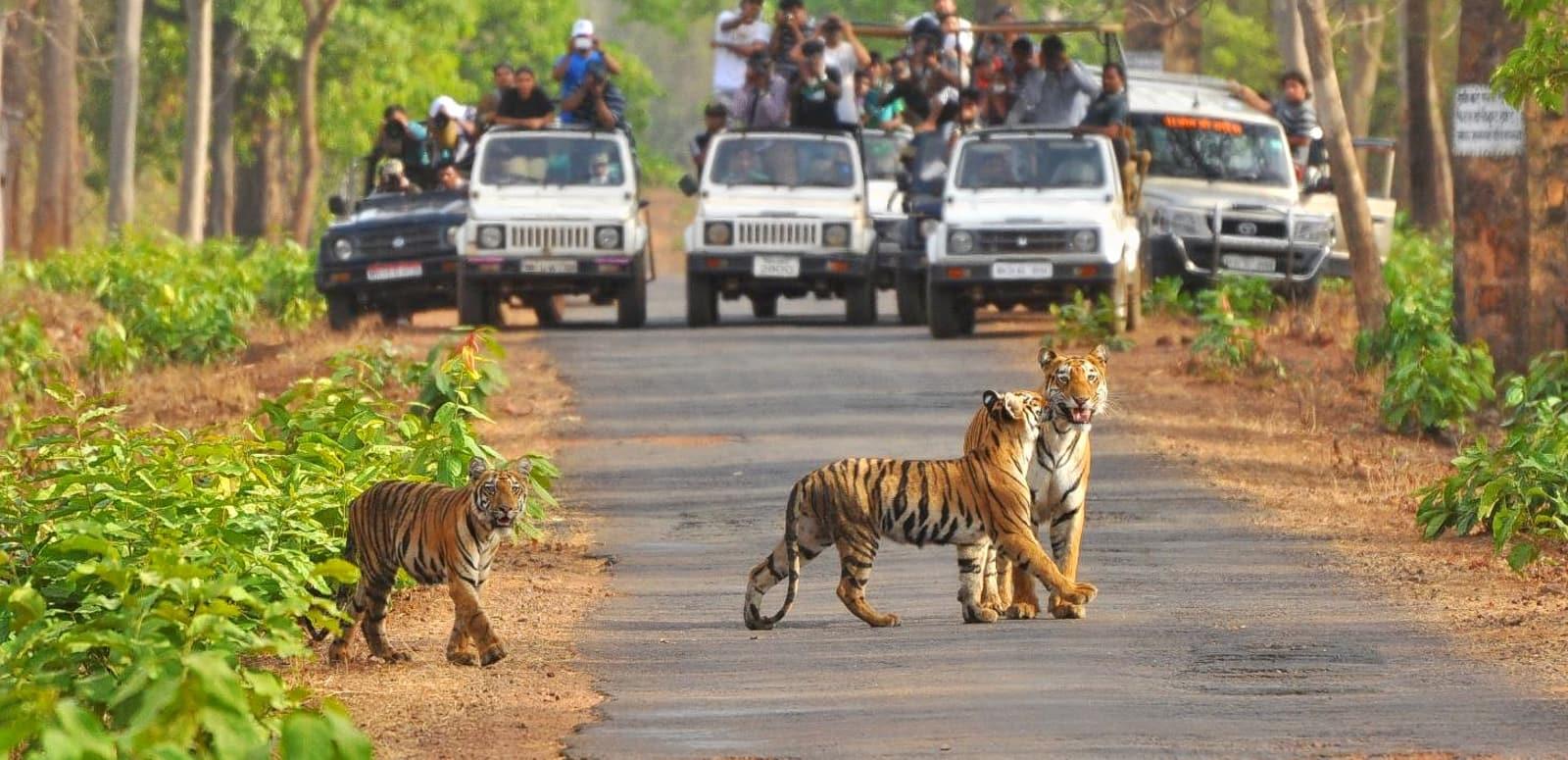 Corbett With Jungle Safari