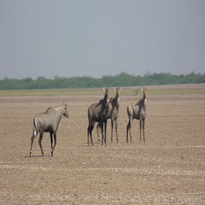 Rann of Kutch Sight Seeing Tour