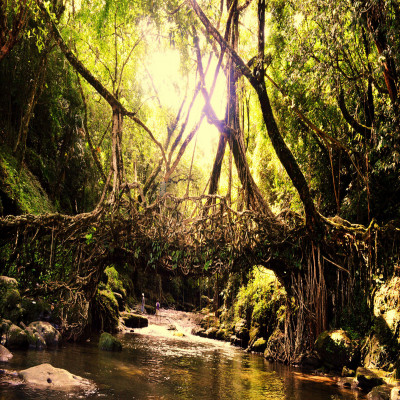Living Root Bridges Place to visit