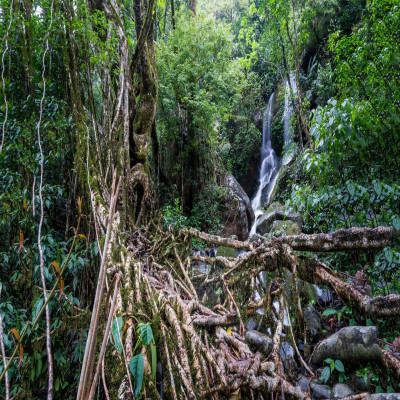 Living Root Bridges Tours