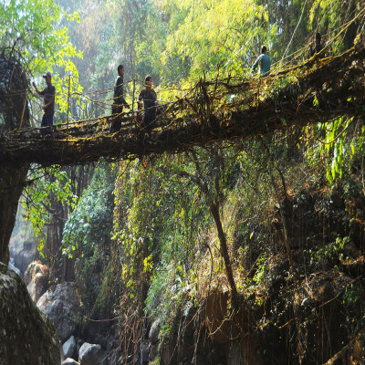 Living Root Bridges Travel Plan