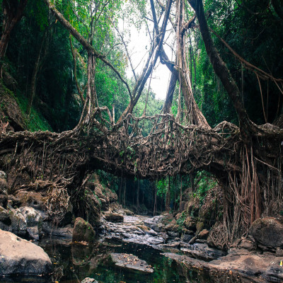 Living Root Bridges Trip