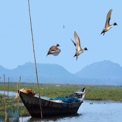 Chilika Wildlife Sanctuary Sight Seeing Tour