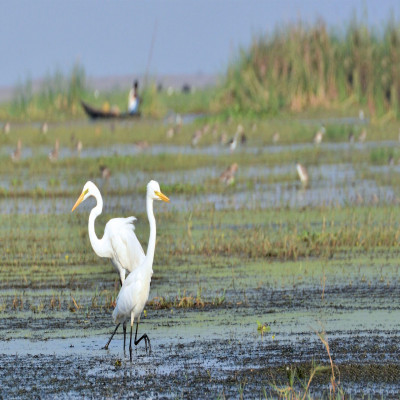 Chilika Wildlife Sanctuary Tours