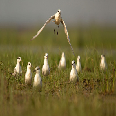 Chilika Wildlife Sanctuary Travel Plan