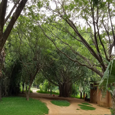 Auroville Sight Seeing Tour