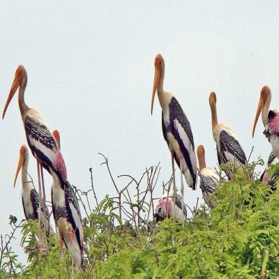 Harike Wetland and bird sanctuary Place to visit