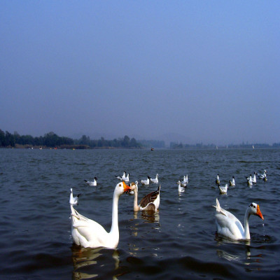 Sukhna Lake Package Tour