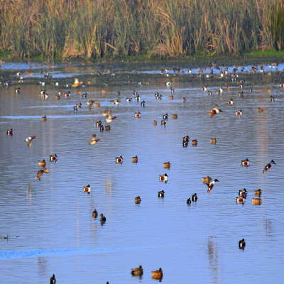 Okhla Bird Sanctuary Places to See