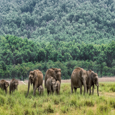 Jim Corbett National Park Sight Seeing Tour