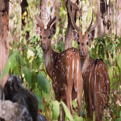 Jim Corbett National Park Sightseeing