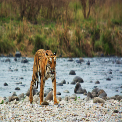Jim Corbett National Park Travel