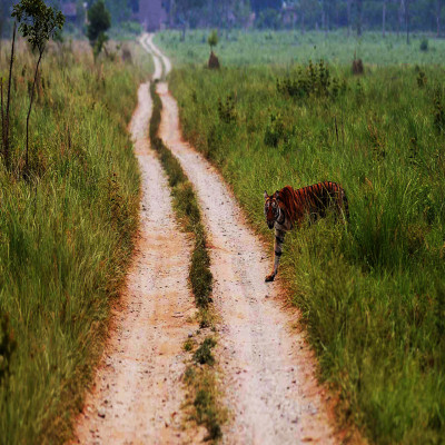 Jim_Corbett_National_Park_Package_Tour