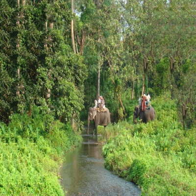 Chilapata Forests Siliguri Place to visit