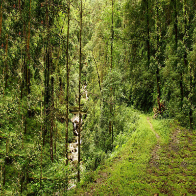 Chilapata Forests Siliguri Travel Plan