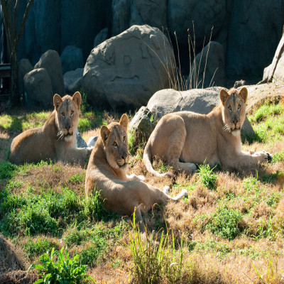 National Zoological Park Places to See