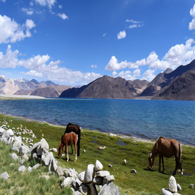 Pangong Lake Package Tour