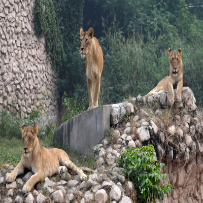 Lucknow Zoo Tours