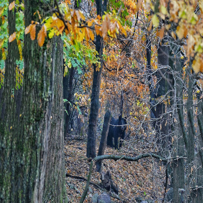 Dachigam Package Tour