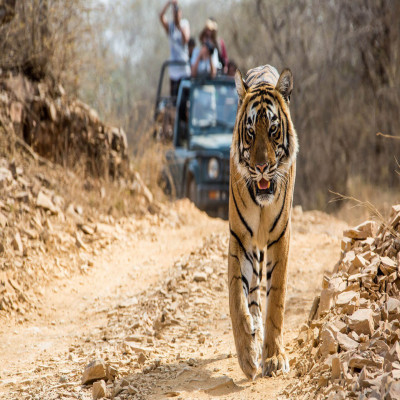 Ranthambore National Park Places to See