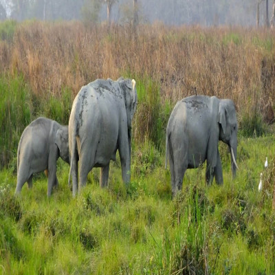 Kaziranga National Park Place to visit