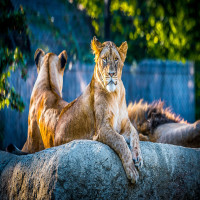 Tata_steel_zoological_park_Attractions