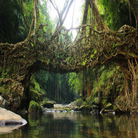Living_Root_Bridges_Sightseeing
