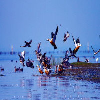 Chilika_Wildlife_Sanctuary_Attractions