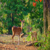 Jim-Corbett_National_Park_Attractions