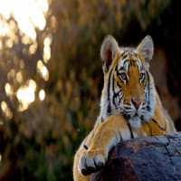 National_Zoological_Park_Attractions