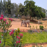 Bannerghatta_National_Park_Attractions