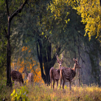 Kanha_Tiger_Reserve_Attractions