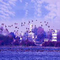 Harike_Wetland_and_bird_sanctuary_Sightseeing