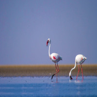Rann_of_Kutch_Attractions