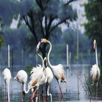 Keoladeo_NationalPark_Attractions