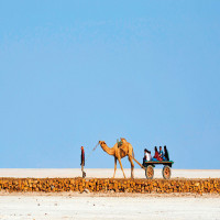 Rann of Kutch Road trip