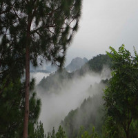 Chail Travel Plan