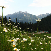Gulmarg Travel Plan