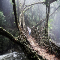Living Root Bridges Travel