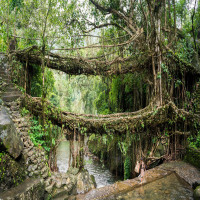 Living_Root_Bridges_Attractions