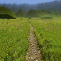 Dzukou Valley Tours