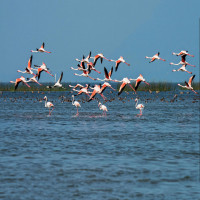 Chilika Wildlife Sanctuary Package Tour
