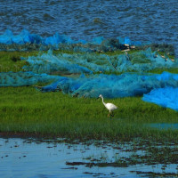 Chilika Wildlife Sanctuary Place to visit