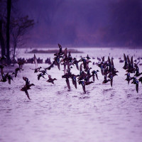 Harike Wetland and bird sanctuary Package Tour