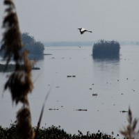 Harike Wetland and bird sanctuary Sight Seeing Tour