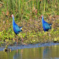Okhla Bird Sanctuary Sight Seeing Tour