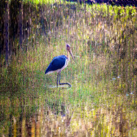 Okhla Bird Sanctuary Travel Plan