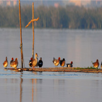 Okhla Bird Sanctuary Trip