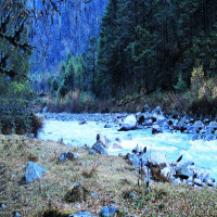 Lachung Lachen and Yumthang Valley Tours