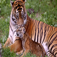 Jim Corbett National Park Places to See
